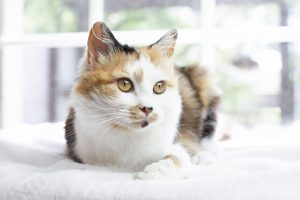 Foster cat, cat rescue, rescue cat, rescued cat, cat foster